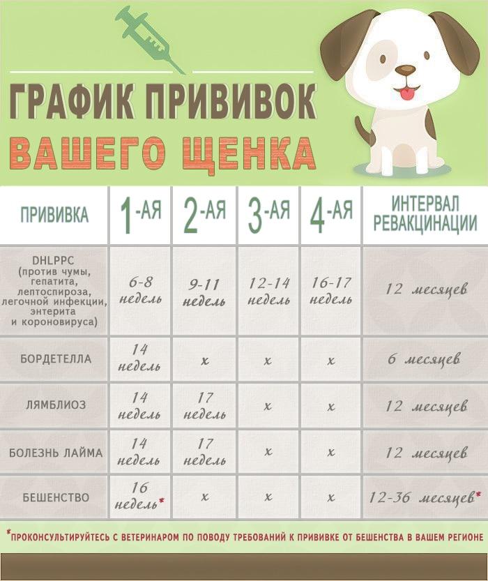 Календарь прививок у щенков и собак