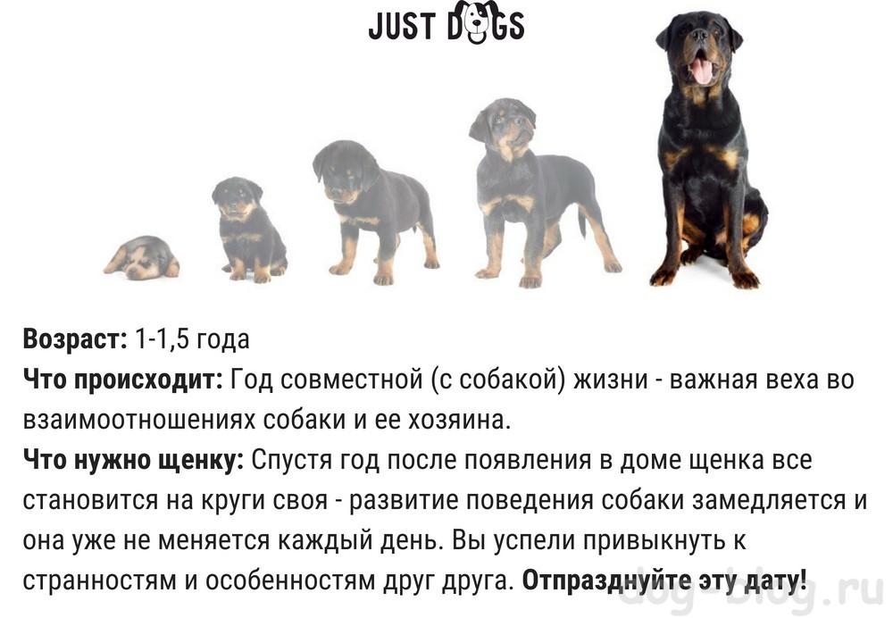 Можно ли собакам гулять после прививки: особенности вакцинации щенков и взрослых псов
