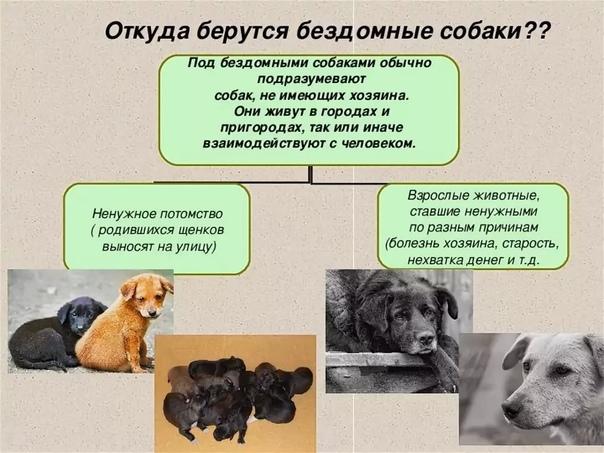 Первые дни собаки из приюта у вас дома