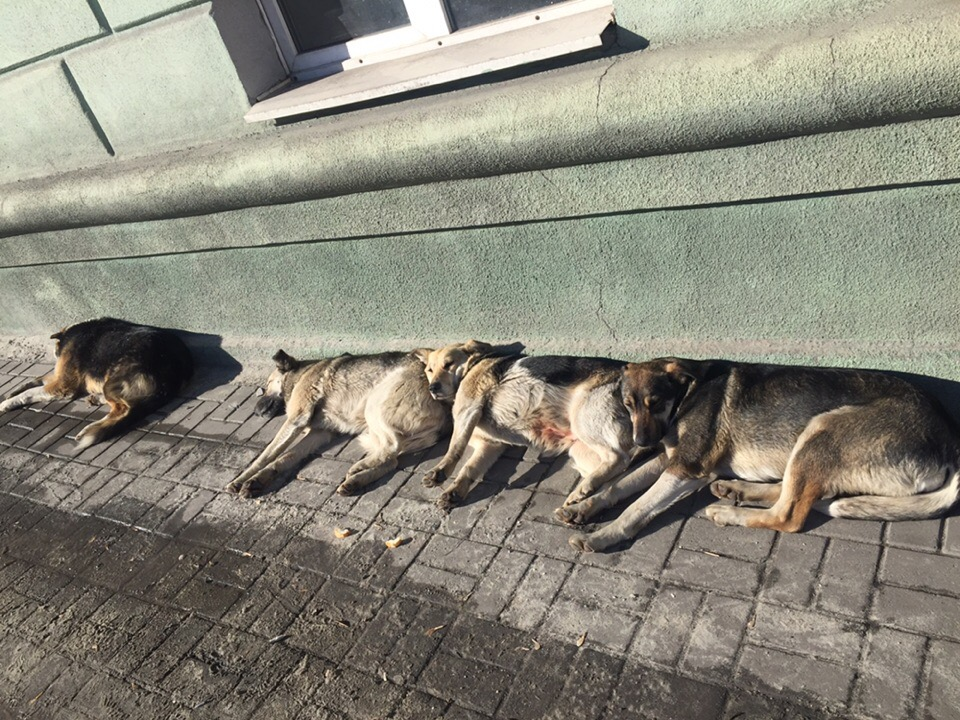 Бродячие собаки - куда обращаться и что делать?