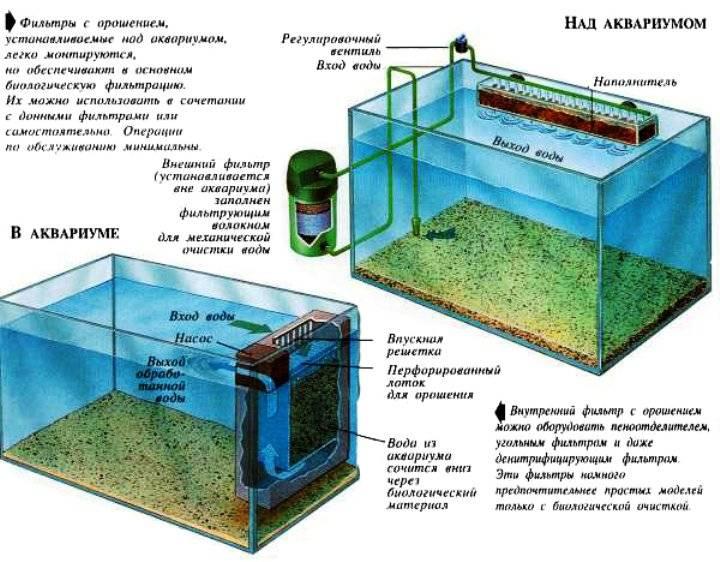 Сколько нужно воды в аквариуме для красноухой черепахи в период бодрствования и спячки, какую лучше наливать и как следить за порядком