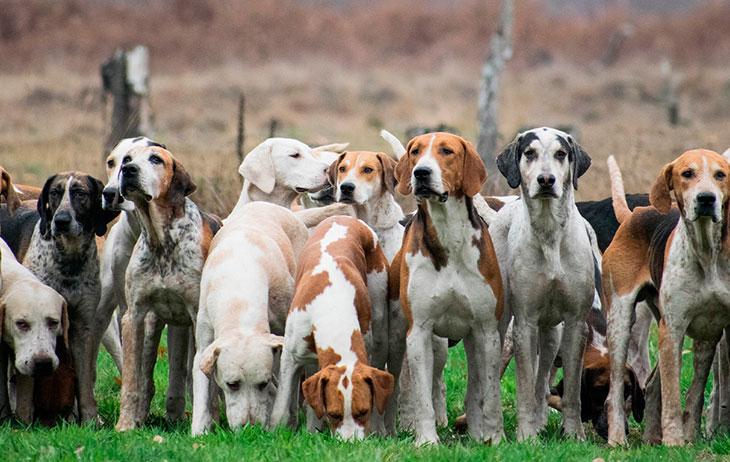 Топ 10 самых верных пород собак в мире