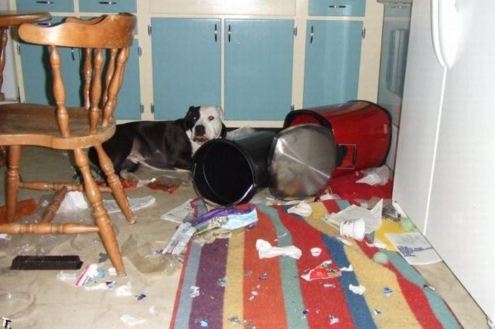 Пушистый защитник от негатива: зачем нужна кошка в квартире и почему питомцы не приживаются?