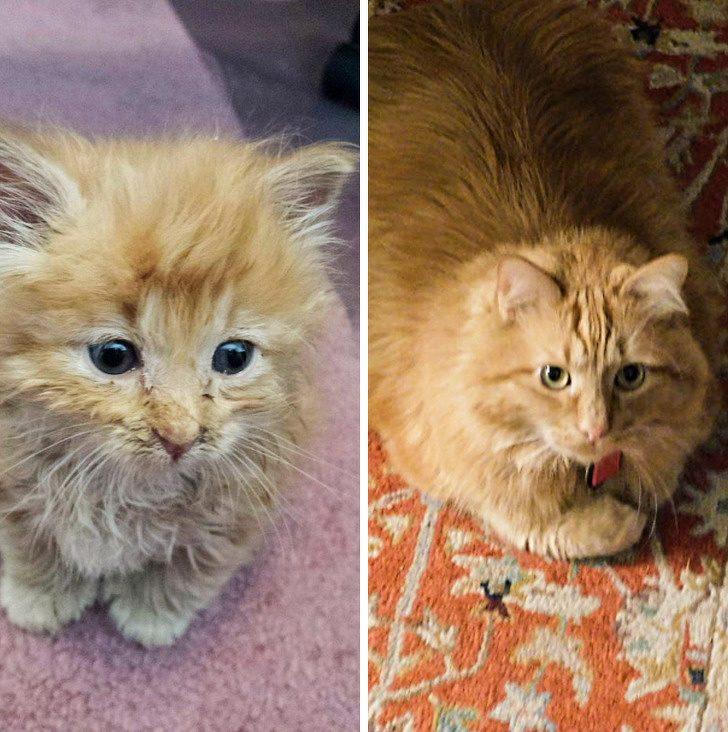 Взросление кошки: уход за котятами, взрослыми и пожилыми кошками | hill's