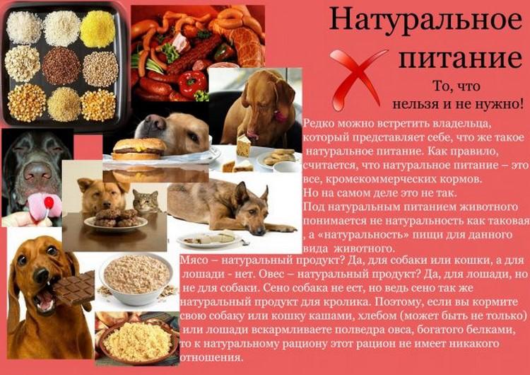 Чем и как правильно кормить щенка от месяца до года