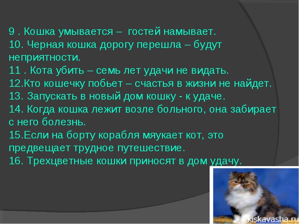 Зачем и почему кошки приходят в дом и что с этим делать