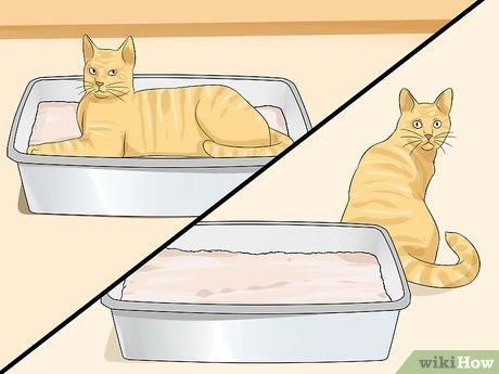 Как приучить кошку к лотку: рекомендации для владельцев взрослых животных и котят