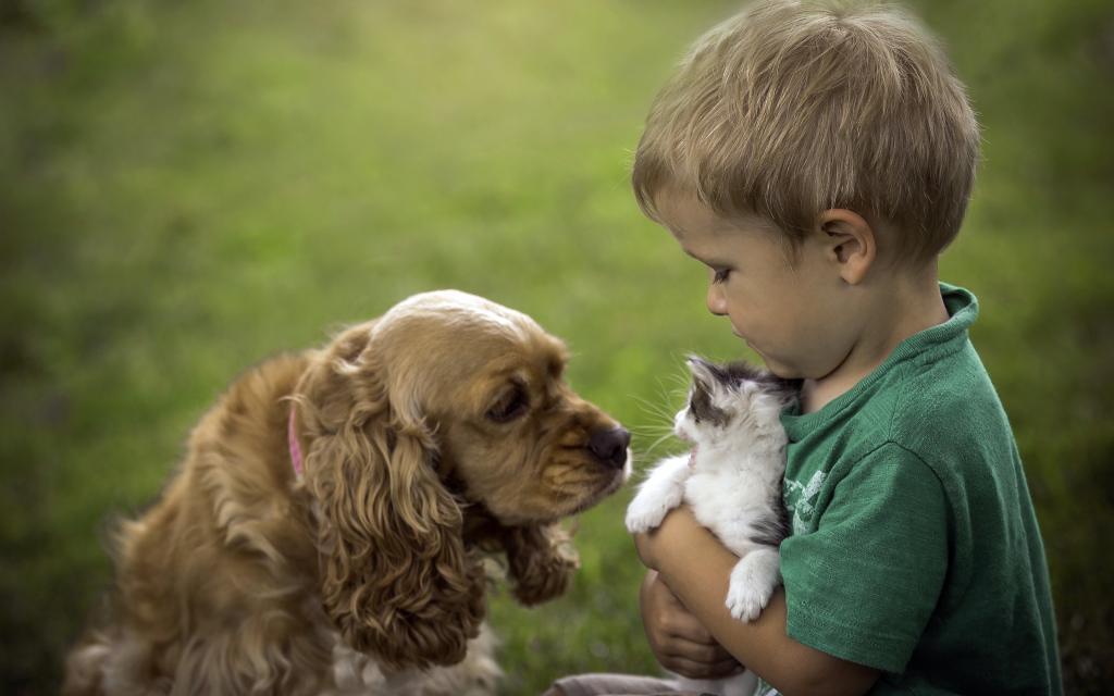 Топ-10 пород собак для неопытных владельцев