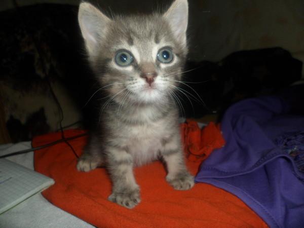 Имена для серых котят и взрослых кошек