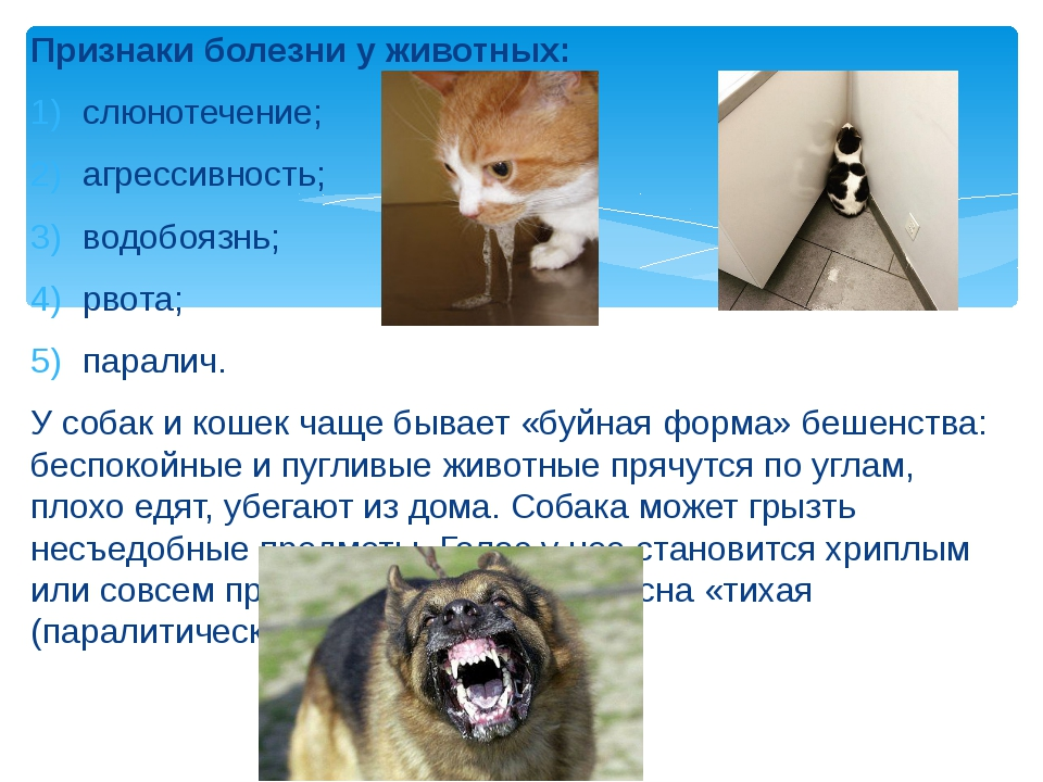 Почему кошка нервничает?   hill's pet
