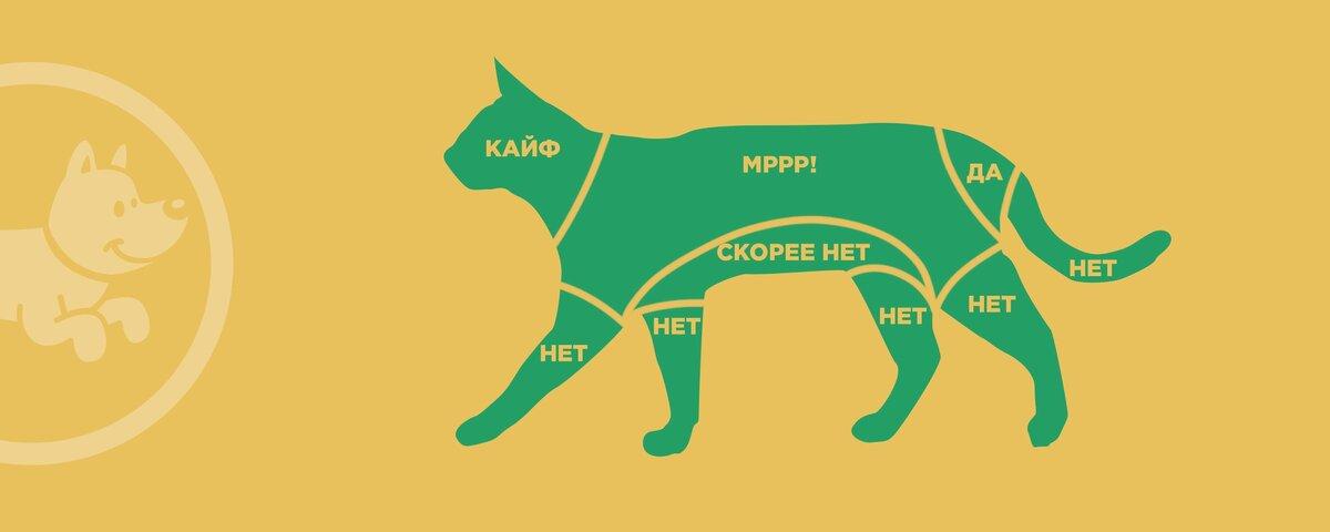 Как правильно гладить кошку. где не нужно гладить кота
