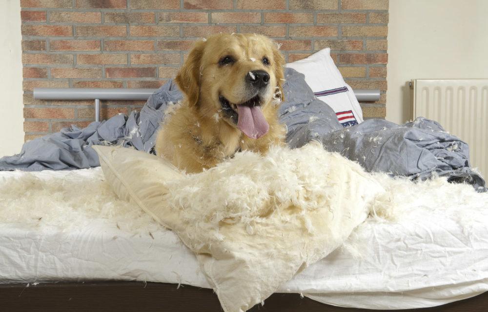 Что творят собаки когда хозяев нет дома