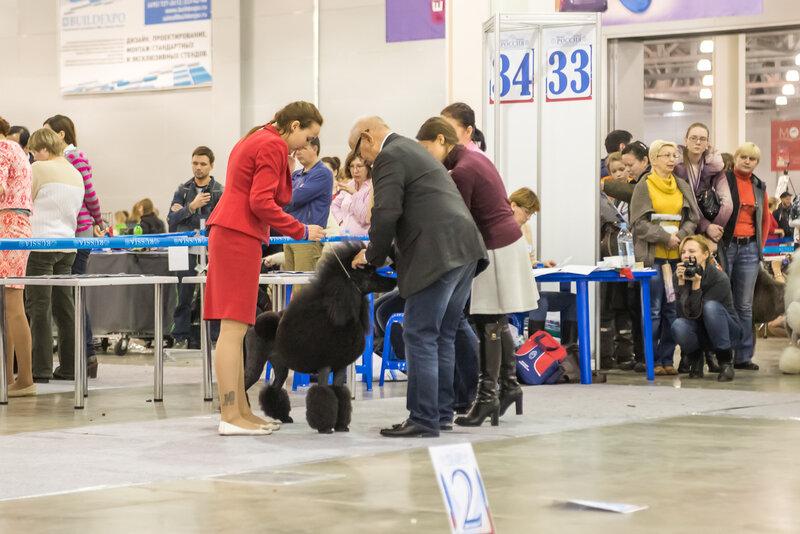 Zooпортал.pro :: интернациональная выставка собак ранга cacib – fci международный кубок енисей 2021-2