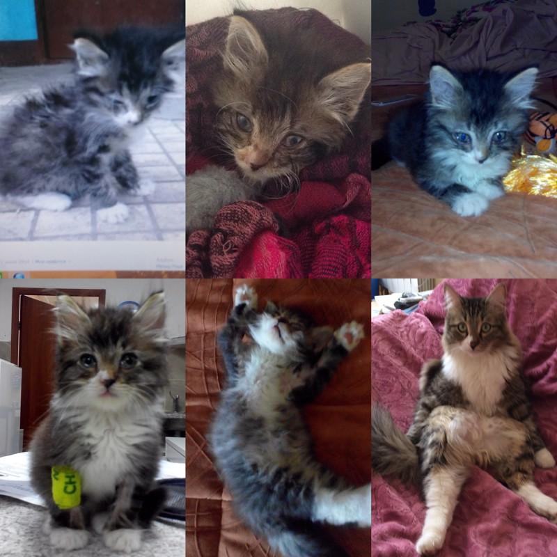 Развитие котят по неделям и по дням после рождения