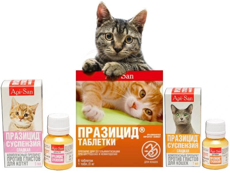Как правильно глистогонить кошек и котят. препараты от глистов