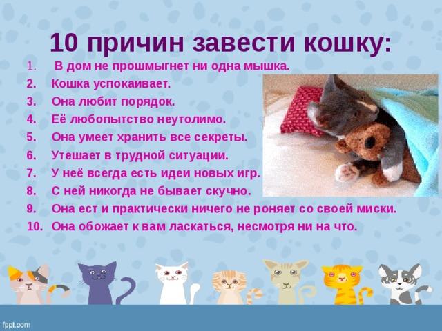 Лайфхаки для котов и кошек, которые упростят жизнь   видео