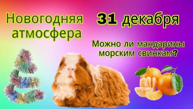 ᐉ можно ли давать морским свинкам черешню - zoopalitra-spb.ru