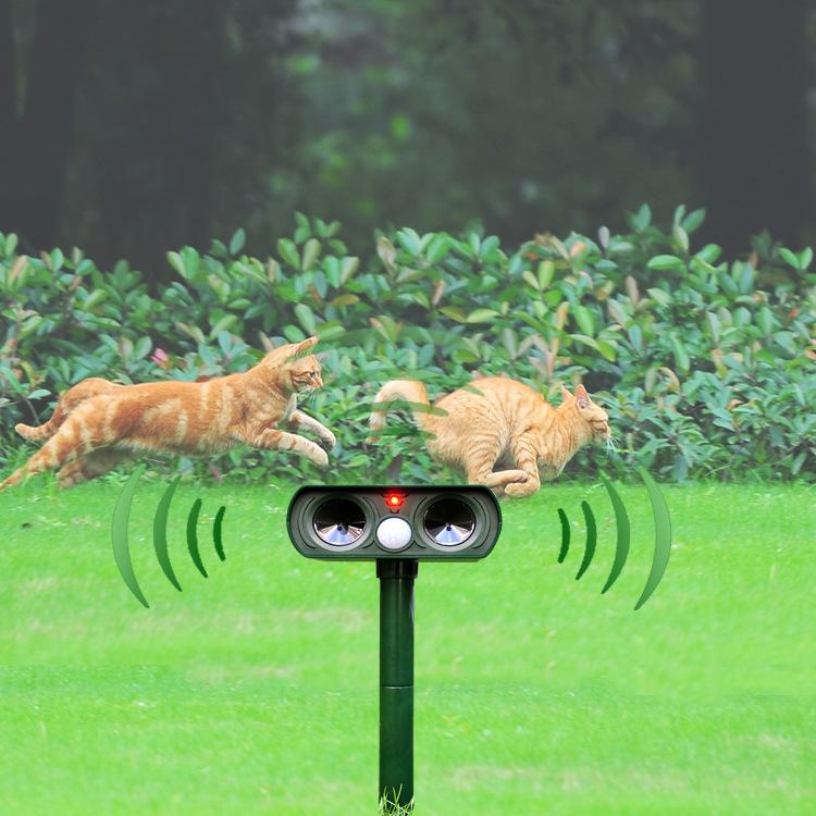 Как избавиться от соседских котов на участке или в подъезде, что делать, чем отпугнуть
