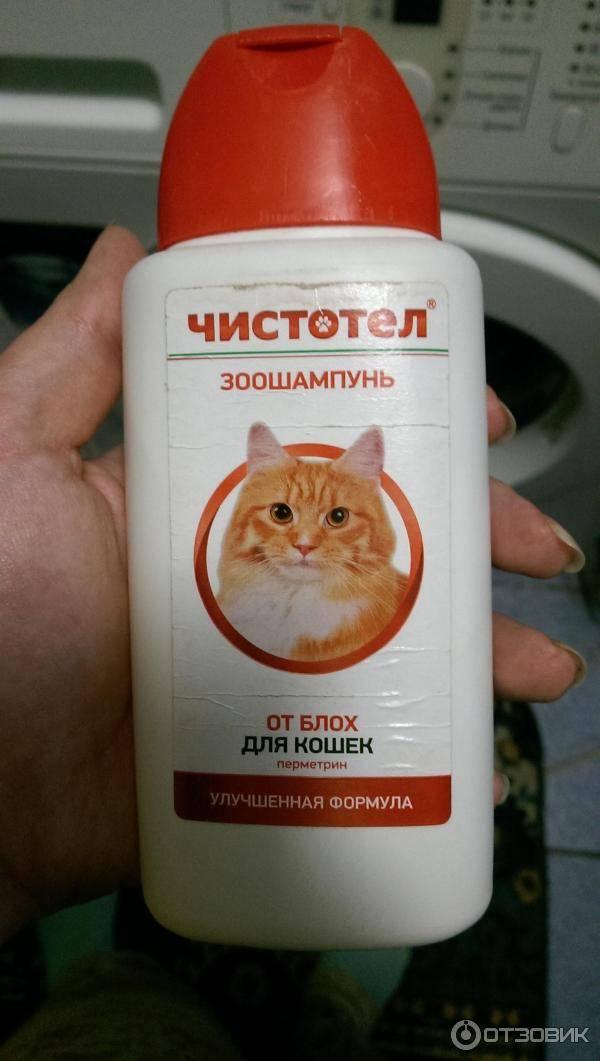 Рейтинг лучших шампуней для кошек и котов в 2021 году