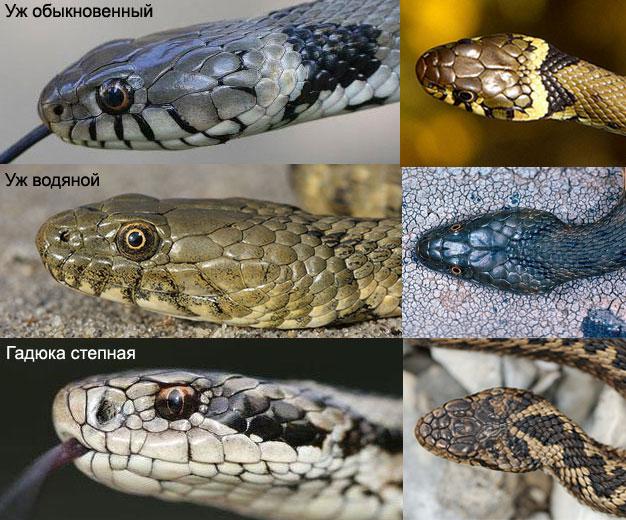 Виды змей — название, описание, фото