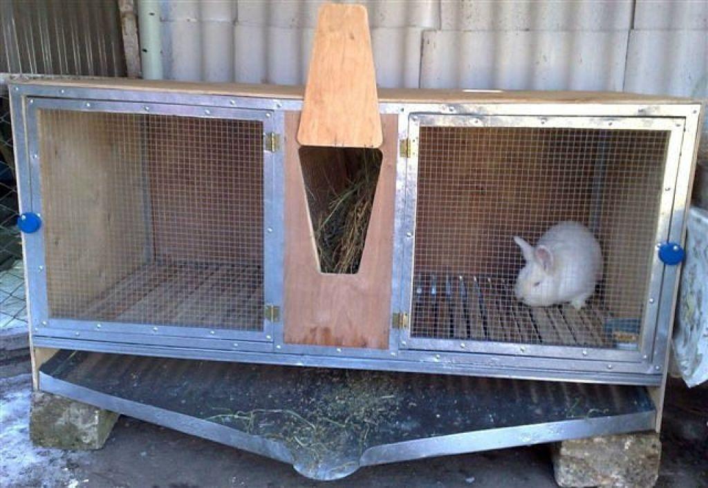 Как избежать ошибок при разведении кроликов. лучшие советы начинающим   свое хозяйство