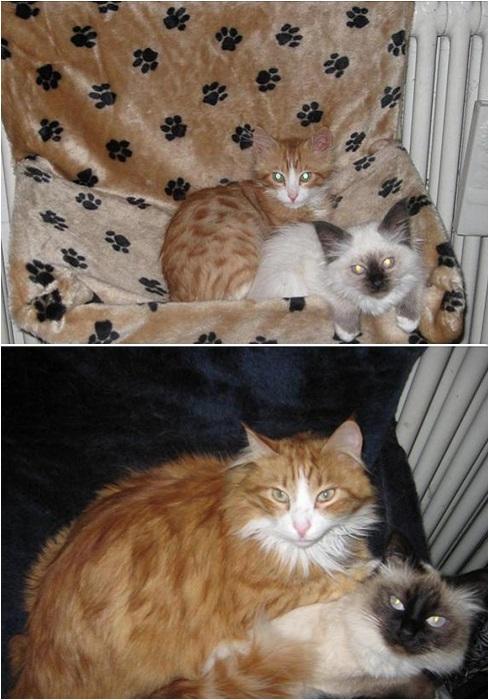 Возраст, когда у котят меняется цвет глаз