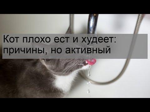 Что делать, если кошка стала плохо есть корм — сухой или влажный