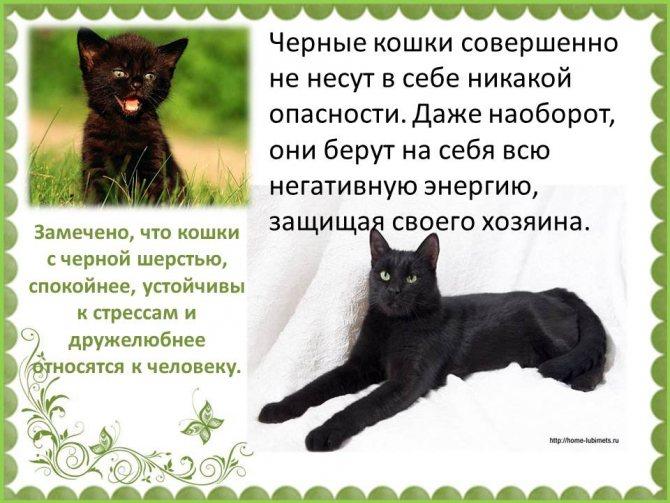 73 приметы про кошек в доме (суеверия, поверья)