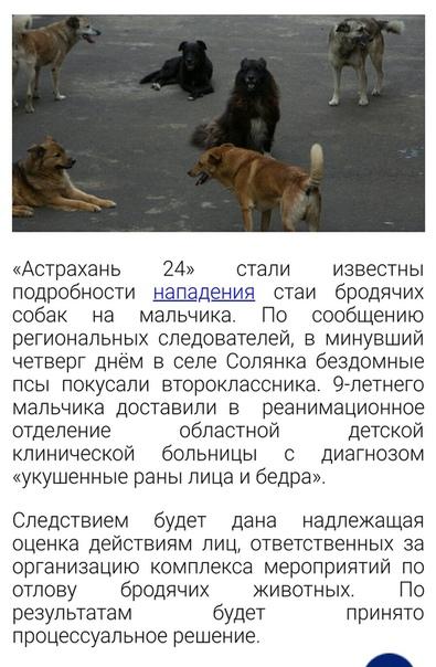 Что делать при встрече со стаей бродячих собак? | hill's
