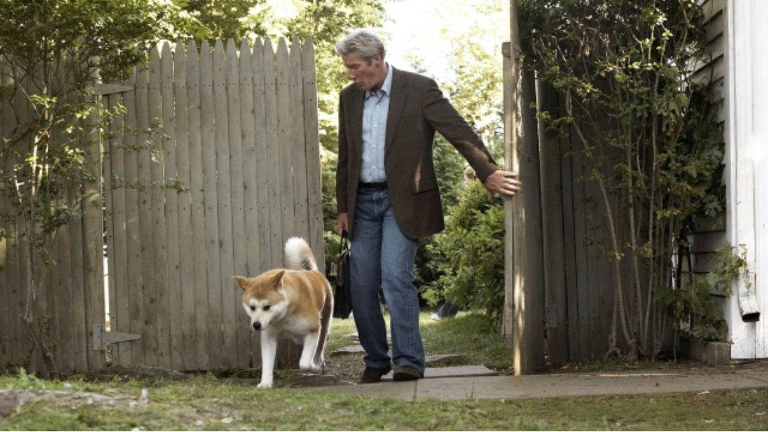 Как называется порода собаки из фильма «хатико»