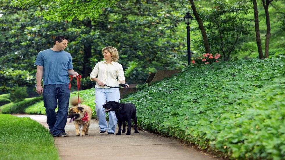 Как правильно начинать гулять со щенком