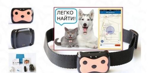 Gps трекер для собак (кошек), обзор технологии и устройств