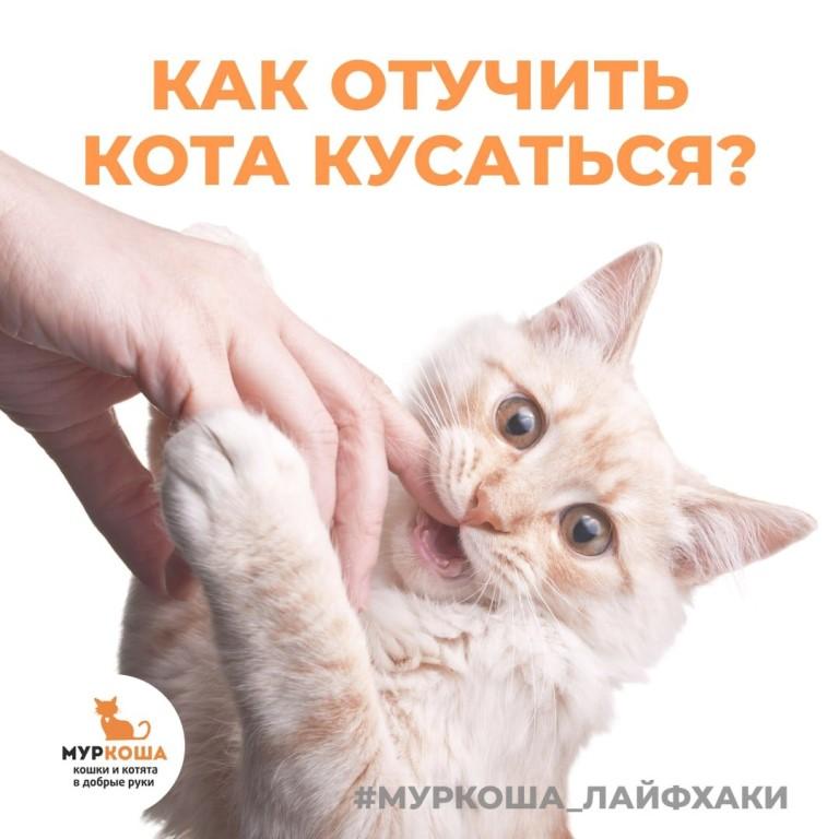 Почему кошка не дает себя гладить. почему кот кусается, когда его гладишь: возможные причины.