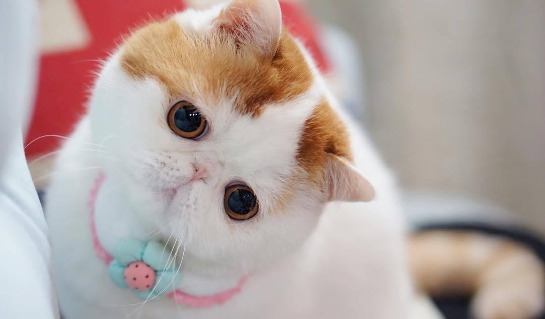 Самые красивые породы кошек в мире с фото и названиями