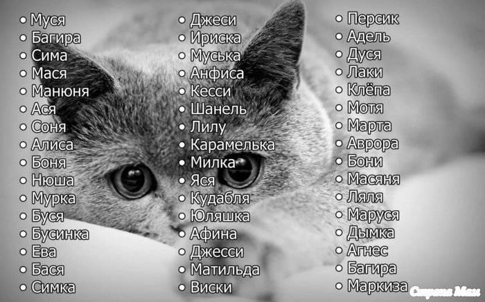 Как назвать рыжего, черного, серого, белого, котенка