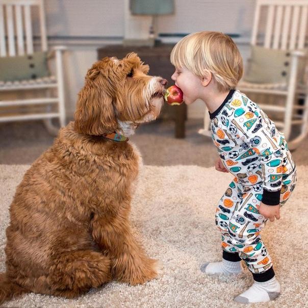 Собака для ребенка: лучшие породы для детей, рекомендации