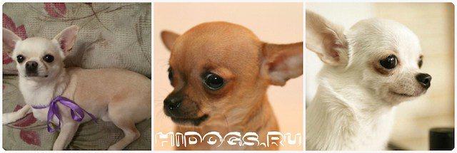 Когда начинается первая течка у собак, в каком возрасте? сколько длится по времени течка у собак и как часто она бывает?