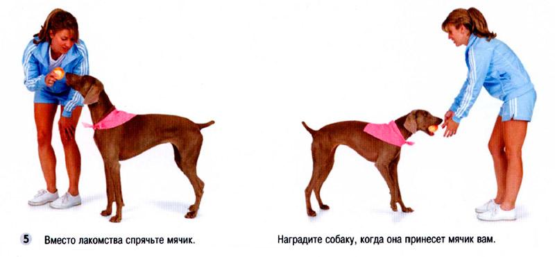 Как научить собаку командам