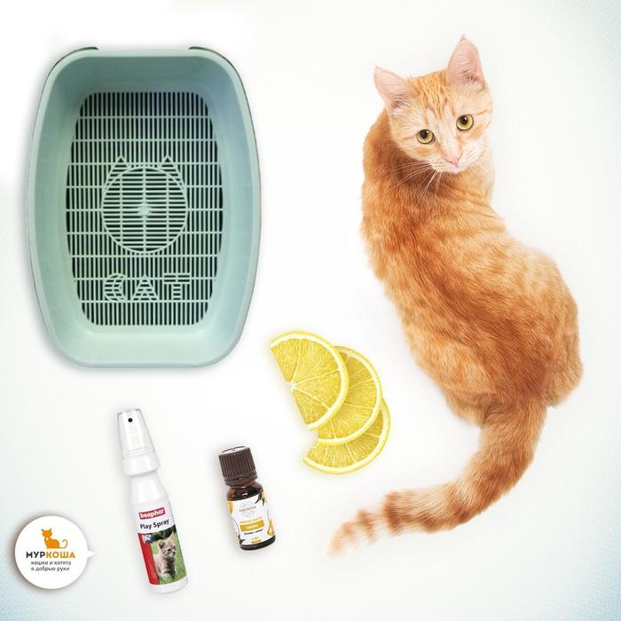 Как отучить кота писать в неположенном месте: советы и рекомендации экспертов. проверенные способы отучить кошку гадить в неположенном месте