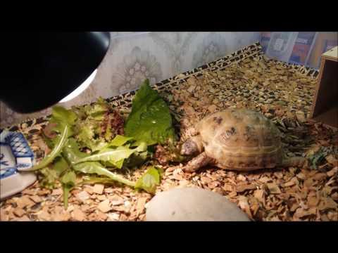 """Размножение морских и сухопутных черепах   блог ветклиники """"беланта"""""""