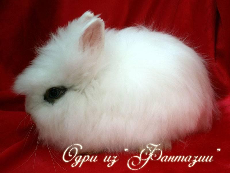 Как назвать карликового кролика: выбираем имя