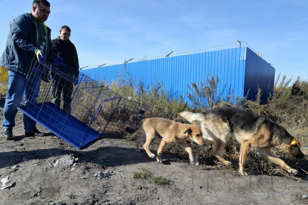 Как избавиться отбездомных животных / статьи  / newslab.ru