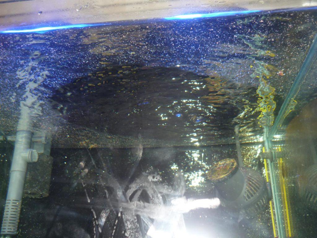 Почему в аквариуме мутнеет вода и воняет
