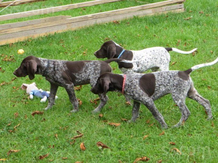 Породы охранных собак: рейтинг, обзор лучших пород