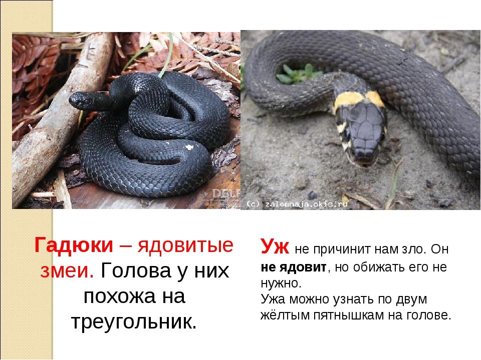 Неядовитые змеи: какие рептилии не опасны для человека - сибирский сад