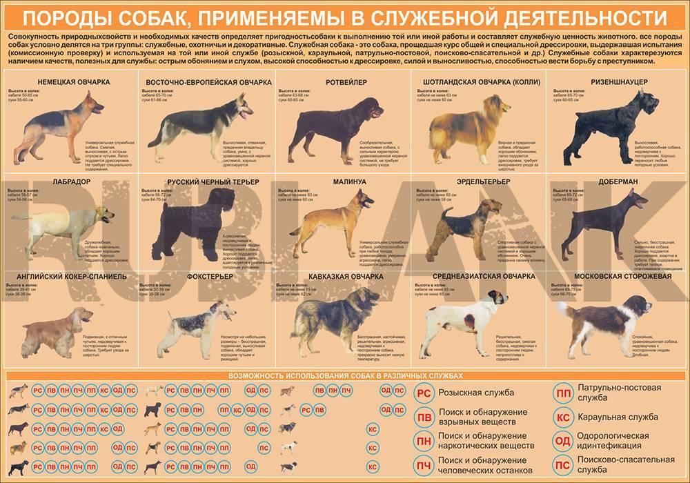 Как узнать возраст собаки или щенка: по зубам, глазам, шерсти, поведению и другим признакам
