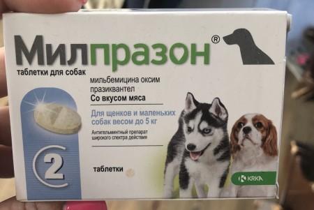 Анотен для собак и кошек – лучшая защита от стрессов
