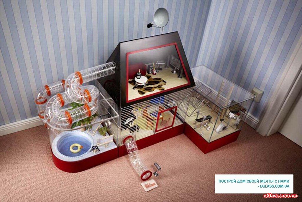 Уход и содержание хомяков в домашних условиях
