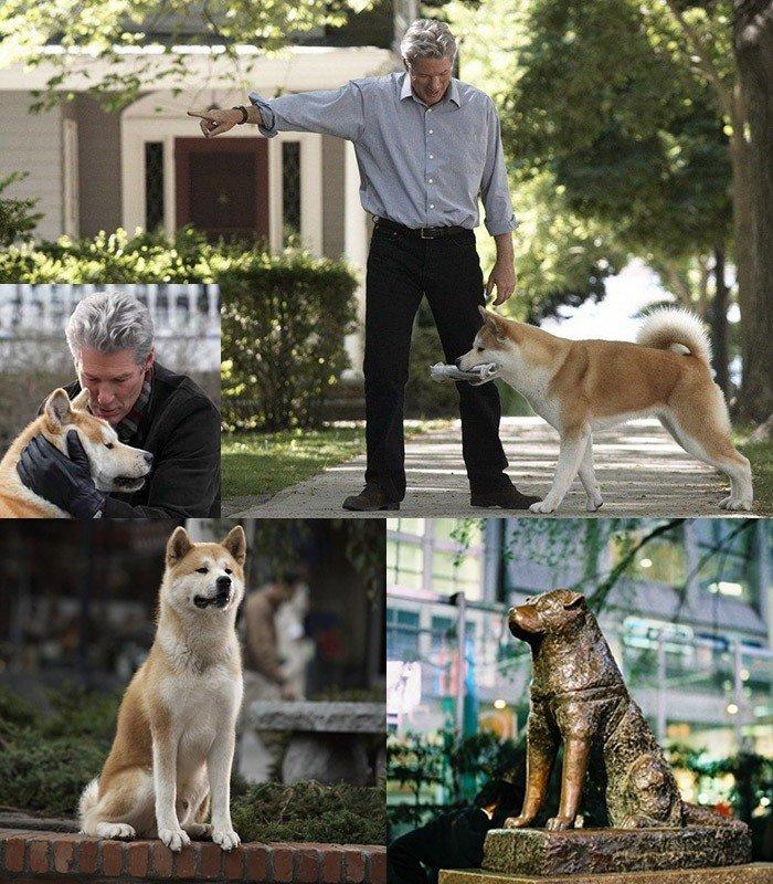 """Как называется порода собаки из фильма """"хатико"""", где собака ждала своего хозяина 8 лет, реальная история хати в японии"""