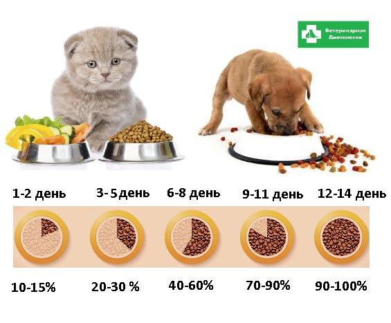 Чем лучше кормить кошек, советы ветеринаров: сухим или влажным кормом